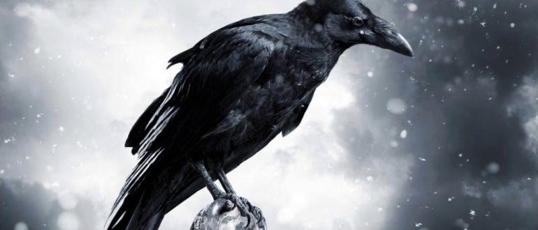 смысл песни черные птицы