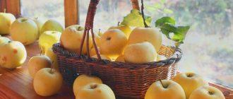Смысл произведения Антоновские яблоки Бунина