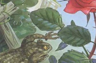 Смысл сказки о жабе и розе