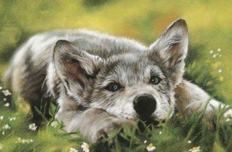 Смысл стихотворения Волчата - Олжас Сулейменов
