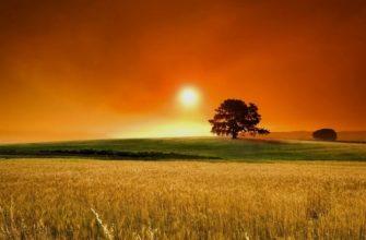 """Краткая история создания стихотворения """"Летний вечер"""" Блока"""