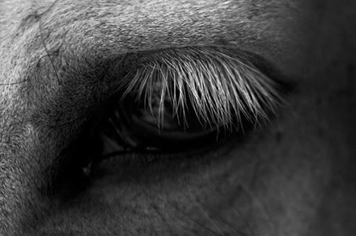 """Очень краткое содержание рассказа """"О чем плачут лошади"""" Ф. А. Абрамова"""