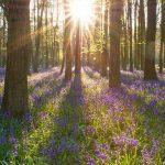 """Каким настроением проникнуто стихотворение """"Весна в лесу"""""""