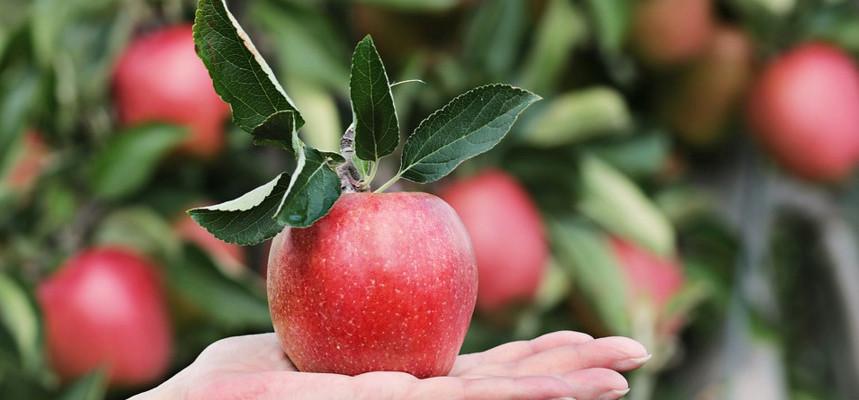 """Смысл пословицы """"Яблоко от яблони недалеко падает""""?"""