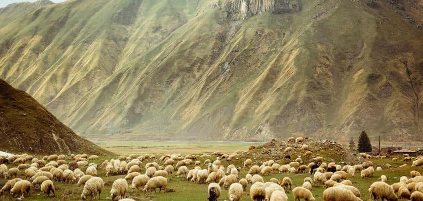 "Смысл книги ""Охота на овец"" Харуки Мураками"