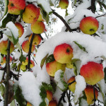 """В чем заключается смысл песни """"Яблоки на снегу""""?"""