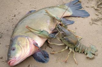 Смысл пословицы «На безрыбье и рак - рыба»