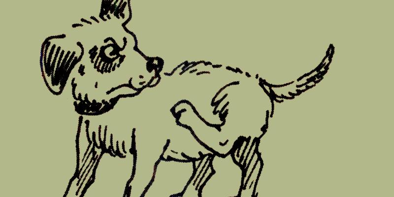 Что означает фразеологизм «Нужен как собаке пятая нога»