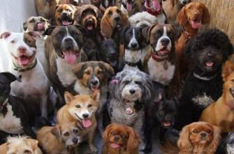 """Что означает фразеологизм """"Вешать всех собак"""""""