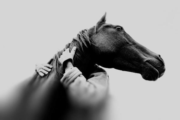"""Смысл произведения """"Хорошее отношение к лошадям"""" - Владимир Маяковский"""