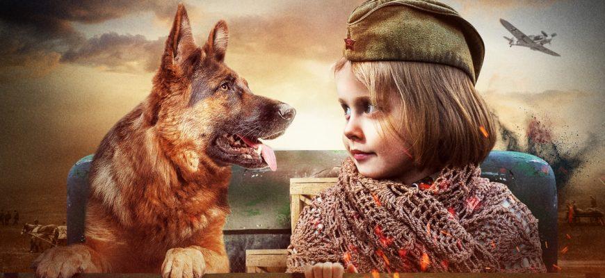 """Чем закончился сериал """"Джульбарс"""", о героической собаке в годы войны"""