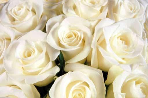 смысл песни белые розы