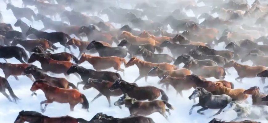 Список лучших фильмов про лошадей