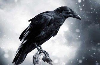 """Смысл песни """"Черные птицы"""" Наутилуса"""